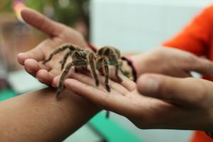 classroom pet spider