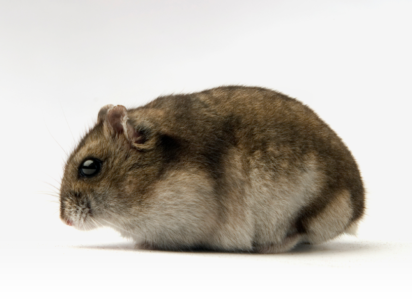 Hamsterx.de