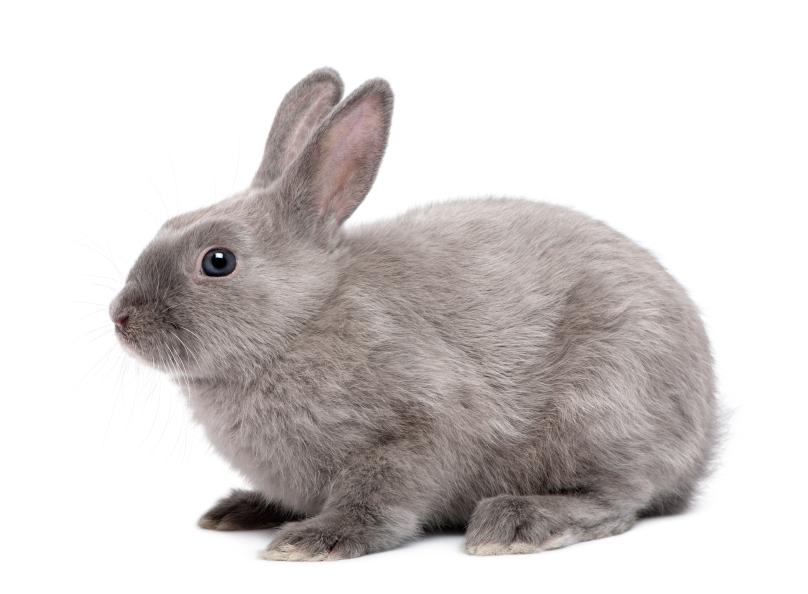 Rabbits As Classroom Pets Education Grants
