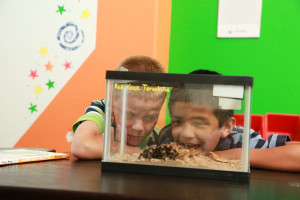 classroom pet benefits