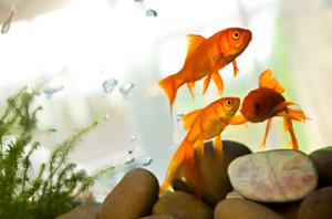 classroom fish